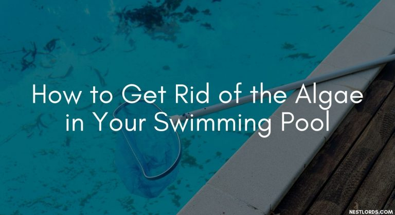 How to Get Rid of the Algae in Your Swimming Pool
