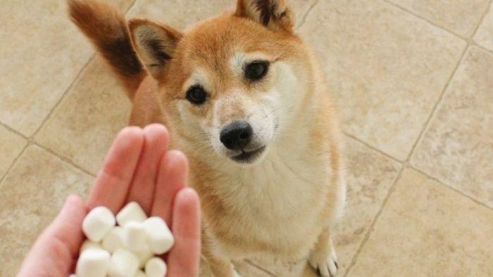 Dog Allergies: Symptoms & Treatment 5
