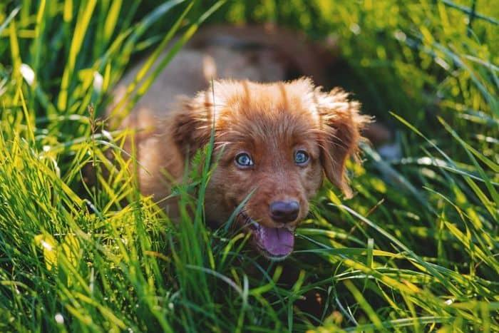 Dog Allergies: Symptoms & Treatment 2