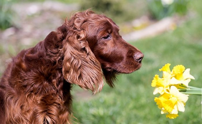 Dog Allergies: Symptoms & Treatment 3