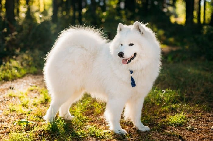 The 20+ Best Hypoallergenic Dogs For People With Allergies 20