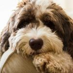 Mange in Dogs: Demodectic and Sarcoptic Mange in Canines 10