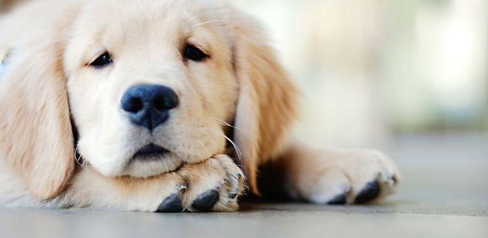 Dog constipation 4