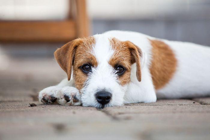 Dog constipation 2