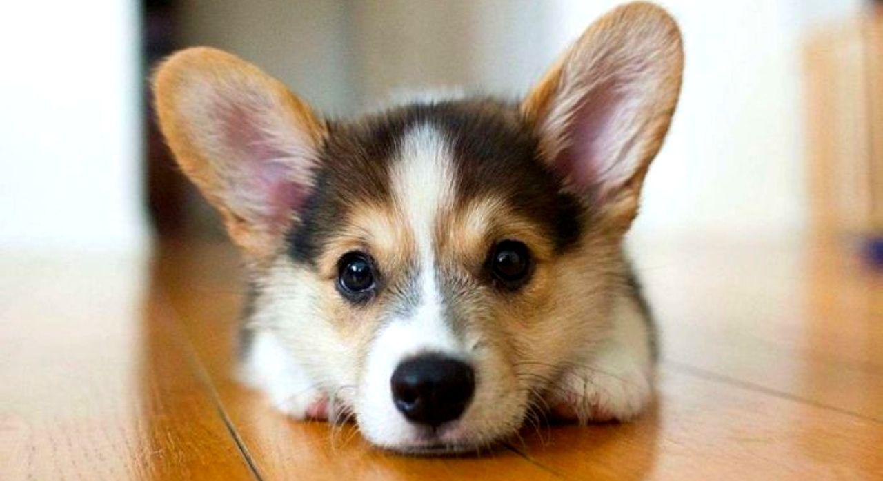 Dog Diarrhea: Treatment, Causes & Remedies 1