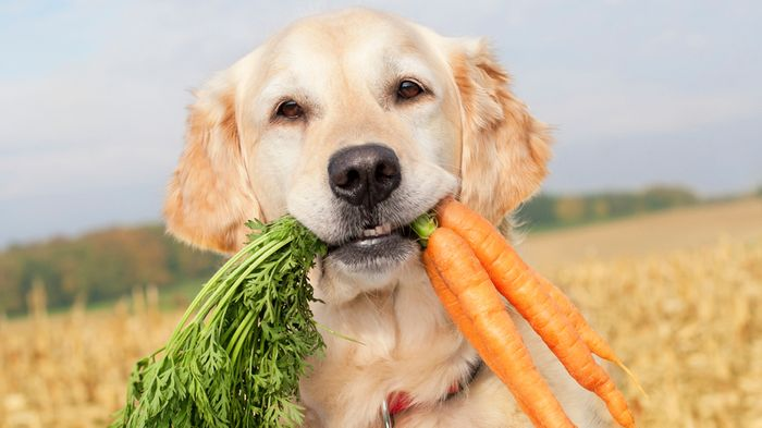 How much should I feed my dog? 6