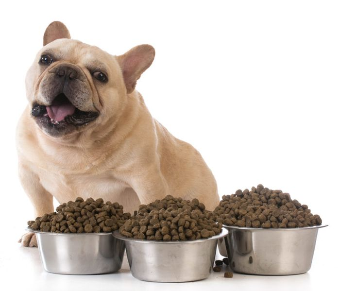 How much should I feed my dog? 4