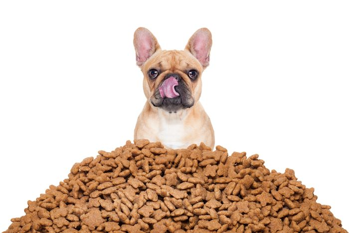 How much should I feed my dog? 9