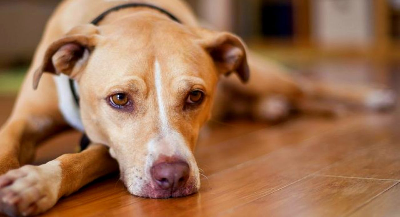 Dog Vomiting: Causes, Treatment, and Related Symptoms 1