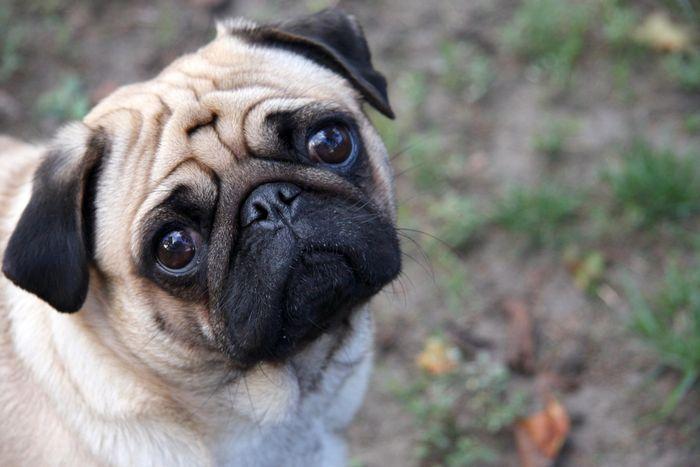 Dog Diarrhea: Treatment, Causes & Remedies 6