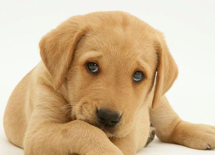 Cushing's Disease in Dogs 4