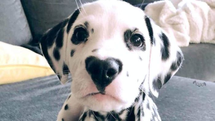 Puppy Shots Schedule: Vaccination Schedule for Puppies 2