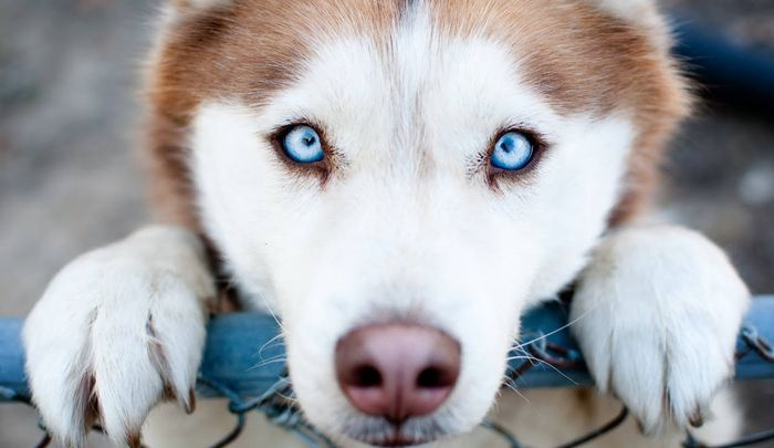 How to Treat and Prevent Hot Spots on Dogs 2020 5