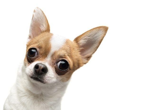 Puppy Shots Schedule: Vaccination Schedule for Puppies 3