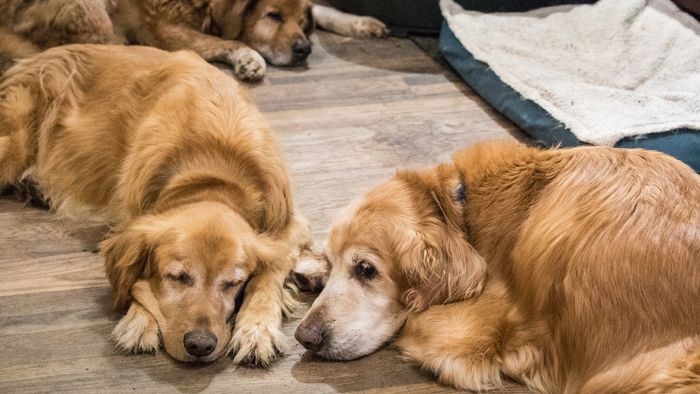How to Treat and Prevent Hot Spots on Dogs 2020 6