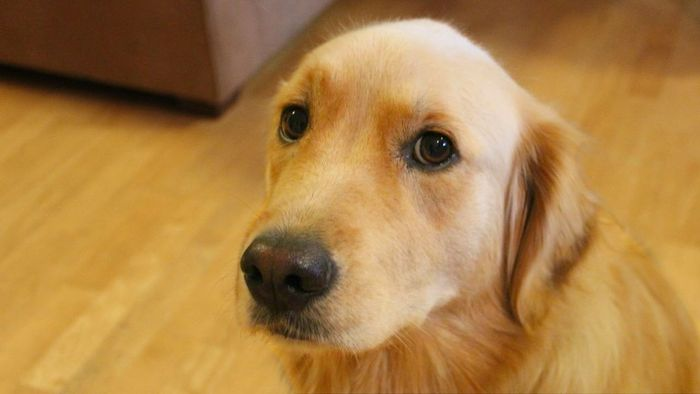 Dog Vomiting: Causes, Treatment, and Related Symptoms 3