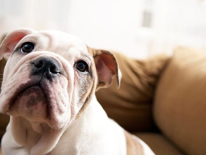 How to Treat and Prevent Hot Spots on Dogs 2020 2