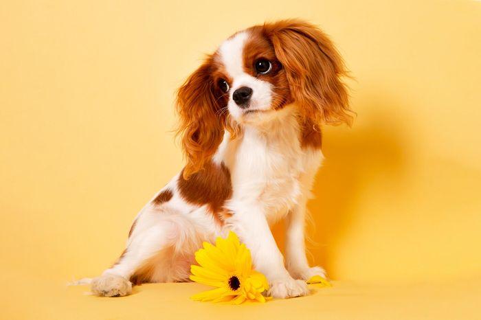 Dog Diarrhea: Treatment, Causes & Remedies 2