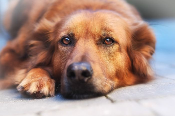 How to Treat and Prevent Hot Spots on Dogs 2020 10