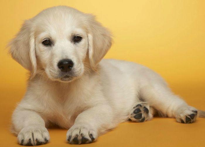 Dog Diarrhea: Treatment, Causes & Remedies 5