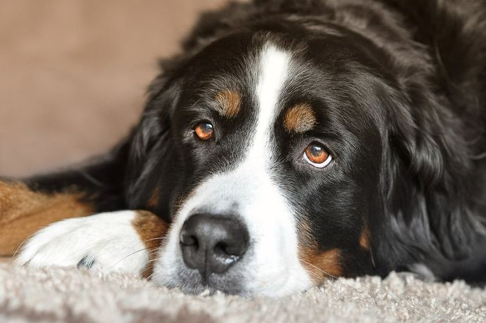 How to Treat and Prevent Hot Spots on Dogs 2020 7