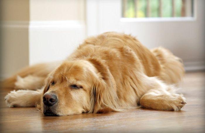 Dog Diarrhea: Treatment, Causes & Remedies 7