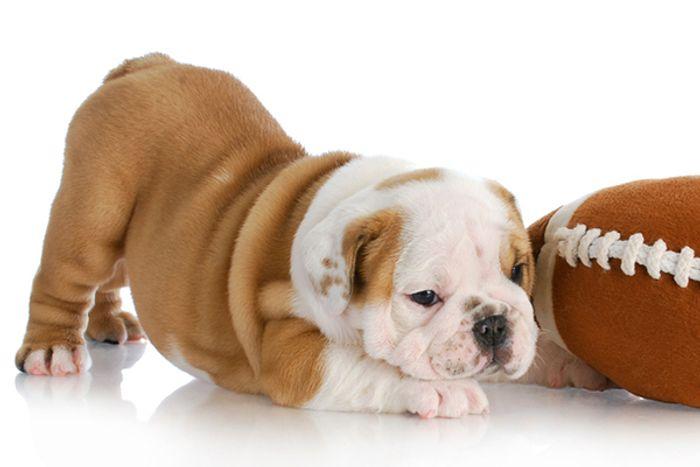 Cushing's Disease in Dogs 6