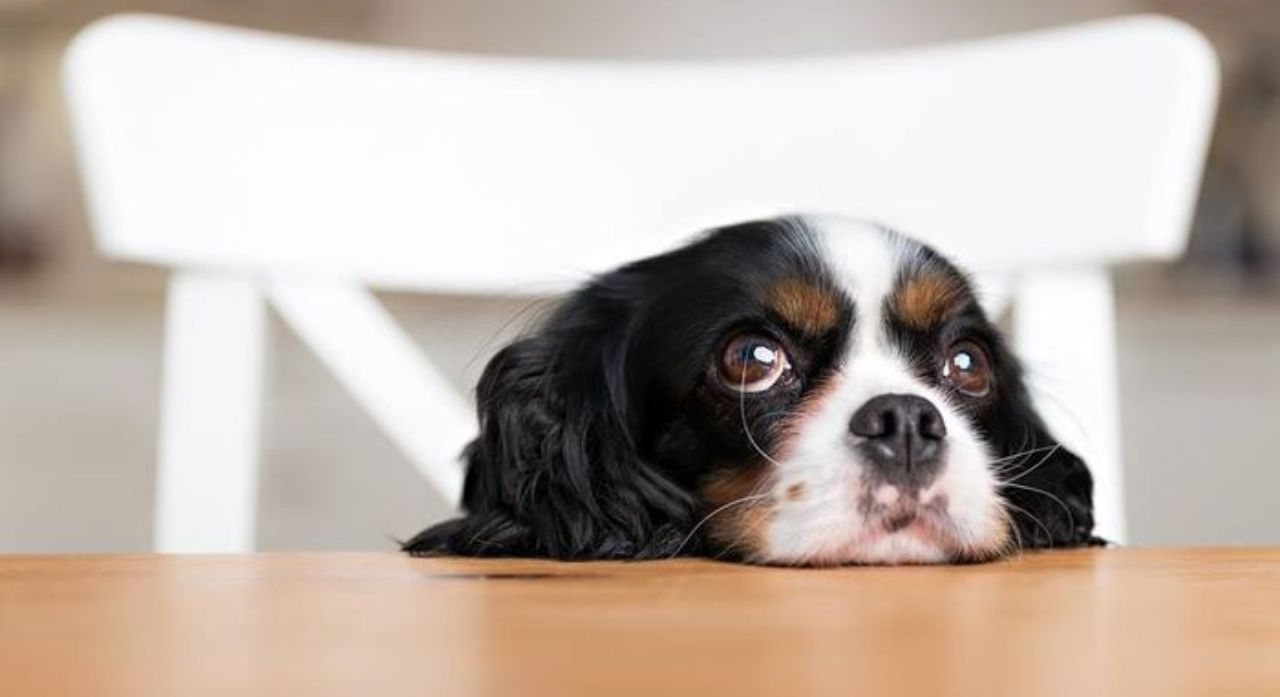 How to Treat and Prevent Hot Spots on Dogs 2020 1