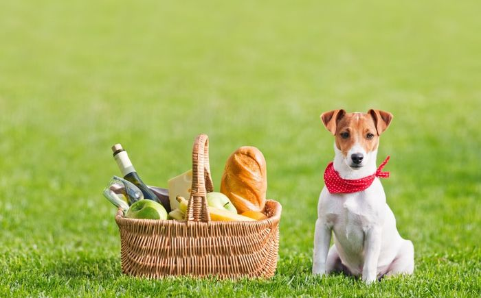 Jack Russell Terrier Dog Breed Information 2020 4