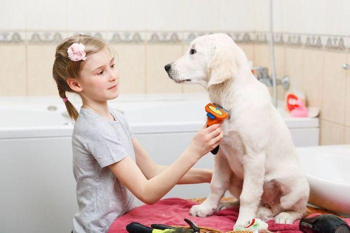 Labrador Retriever Dog Breed Information 2020 5