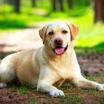 Dog Allergies: Symptoms & Treatment 10