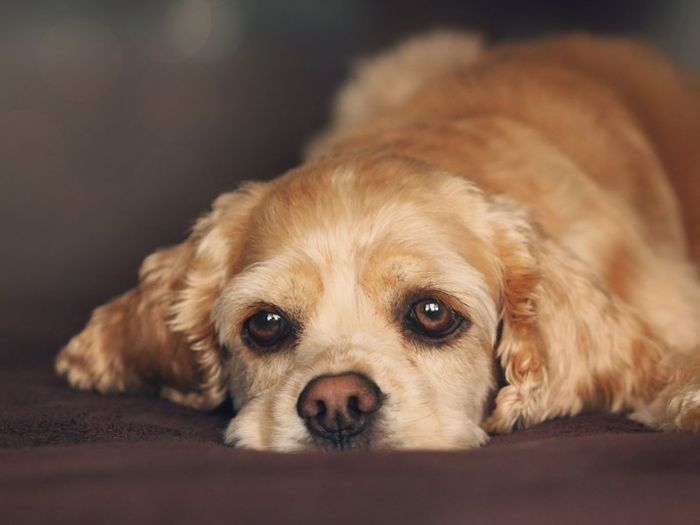 Mange in Dogs: Demodectic and Sarcoptic Mange in Canines 6