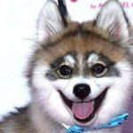 The Full List of Mastiff Dog Breeds 2020 20