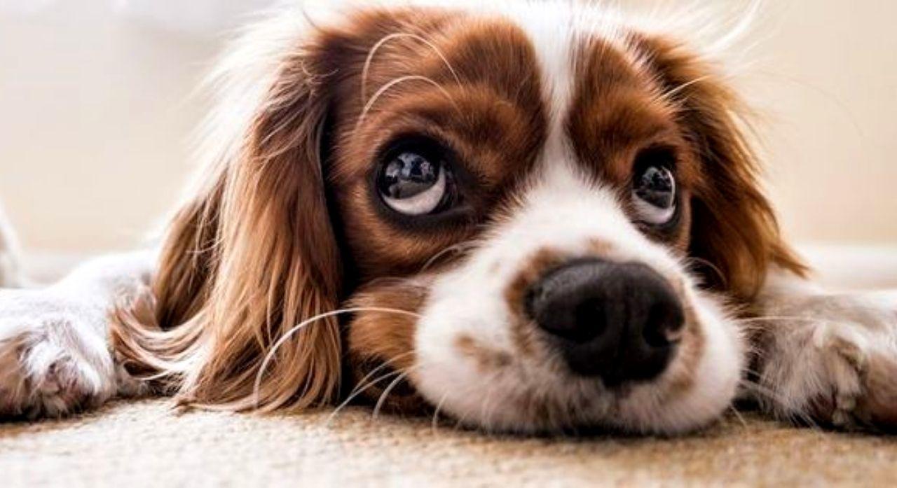 Puppy Shots Schedule: Vaccination Schedule for Puppies 1