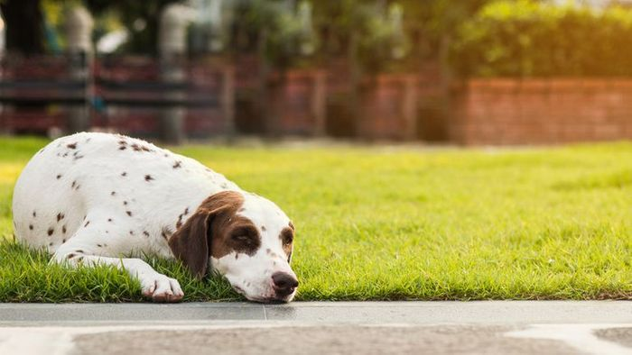 Ringworm in Dogs - Symptoms, Treatment, and Prevention 8