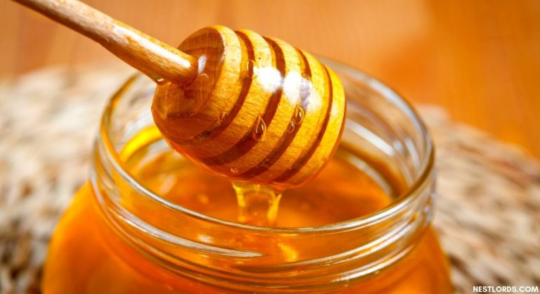 7 Best Honey Extractor 2020 – Reviews & Buying Guide