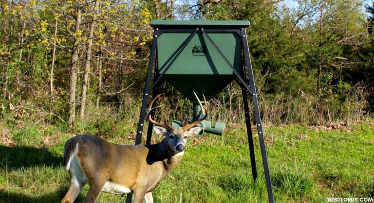 The Best Deer Feeder in 2020: Top 7 Choices for The Greatest Results